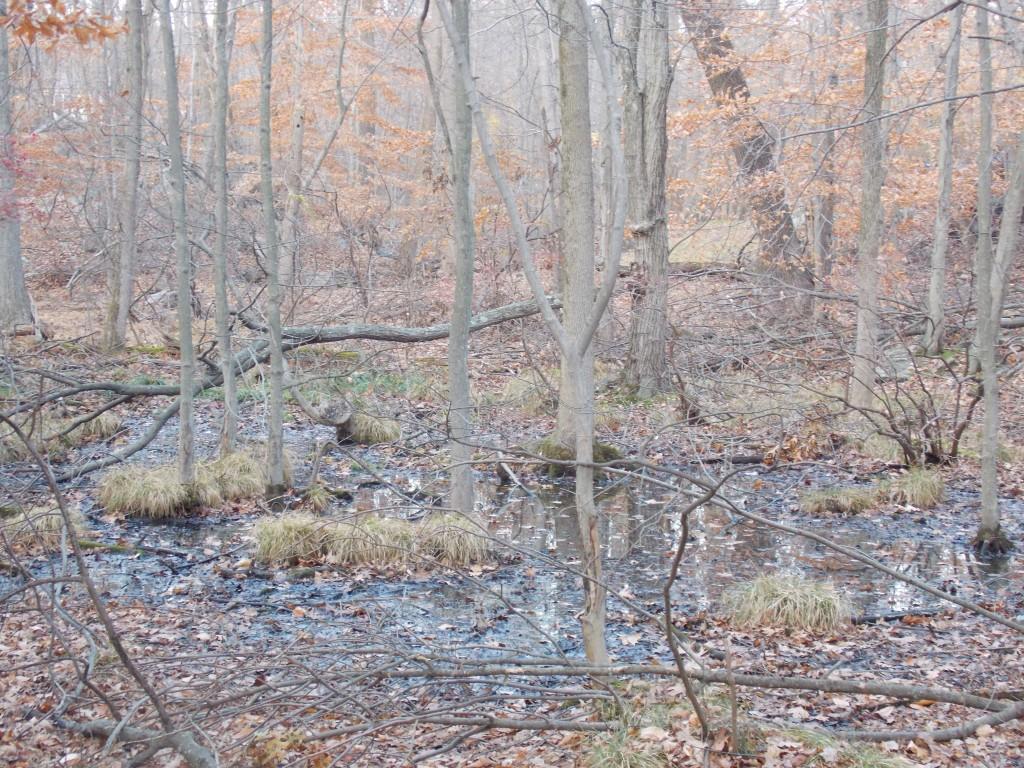 hermits_wetland