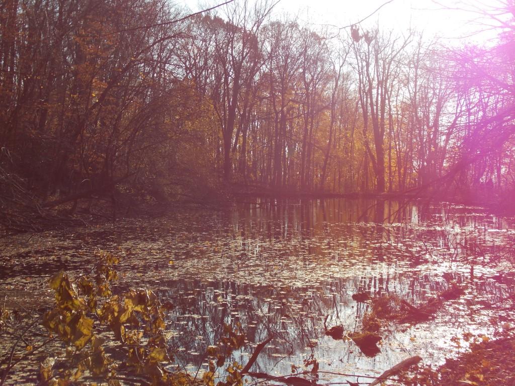 marshall_pond